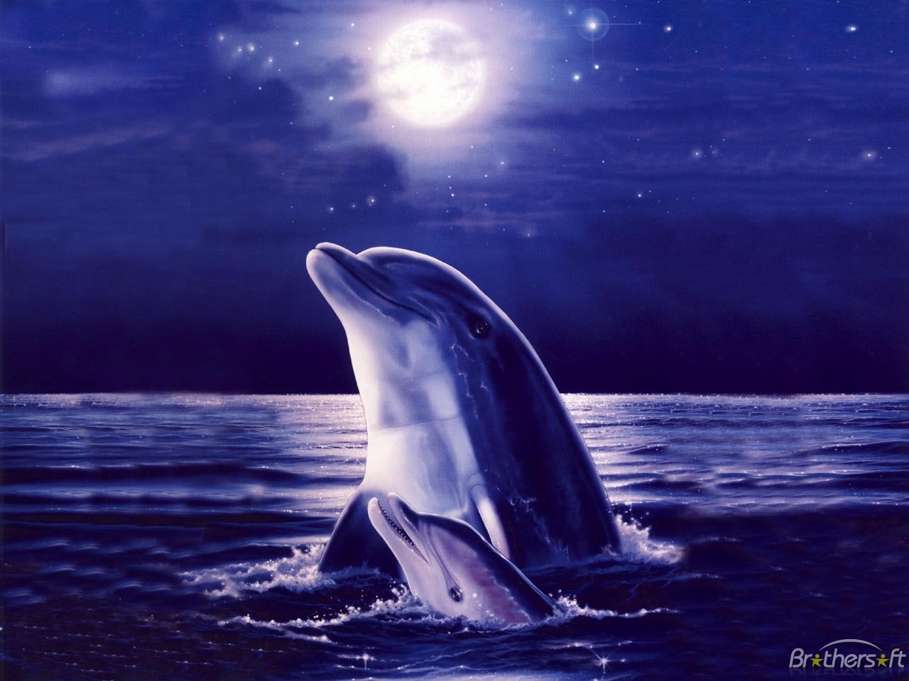 By Dolly Mirando: Dolphin Wallpapers