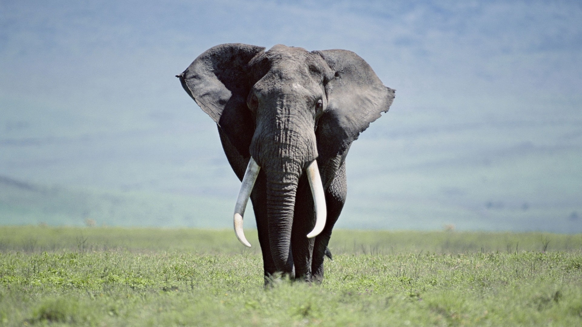 Awesome Elephant Pictures | Elephant Wallpapers