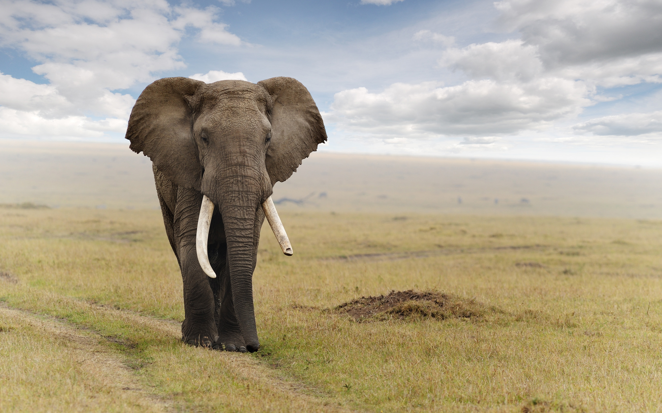 Elephant Full HD Quality Wallpapers
