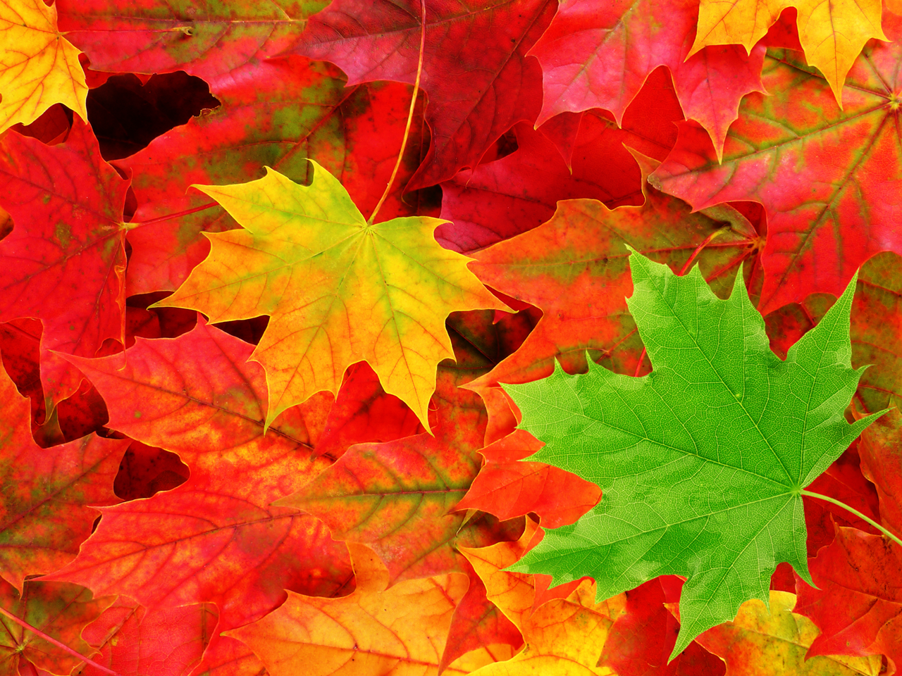 Autumn Leaves HD Widescreen Wallpaper Download, Joseph Elsworth
